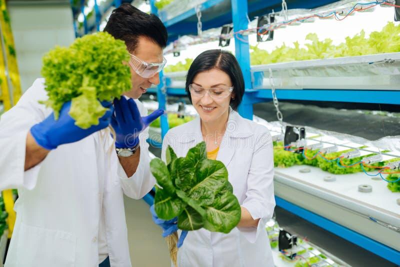 Mannelijke landbouwkundige die aan zijn vrouwelijke collega spreken terwijl het analyseren van greens royalty-vrije stock fotografie