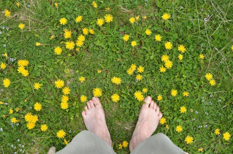 Mannelijke naakte voeten onder paardebloemen stock afbeeldingen