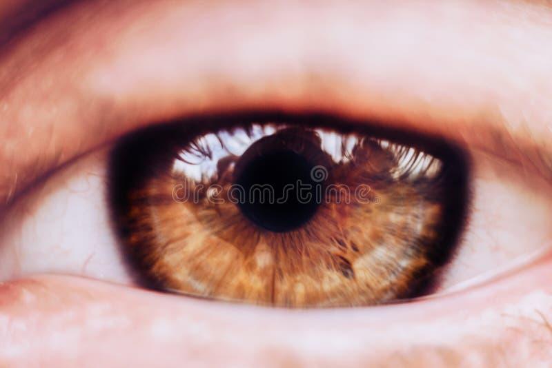 Mannelijke oog dichte omhooggaand de mens onderzoekt het kader bruine iris in macro royalty-vrije stock foto's