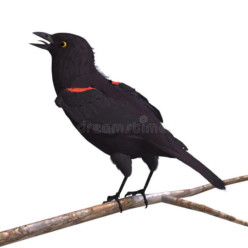 Mannelijke Red-winged Merel stock illustratie