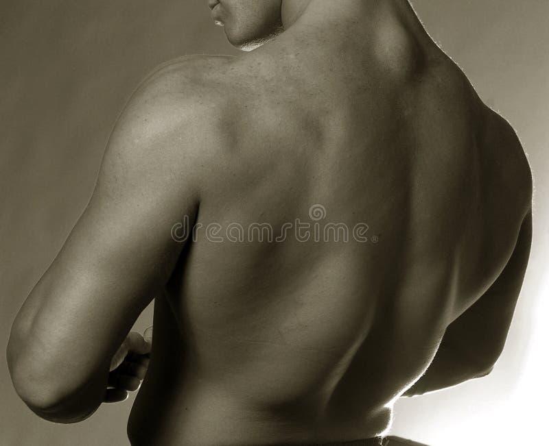 Mannelijke rug royalty-vrije stock afbeeldingen