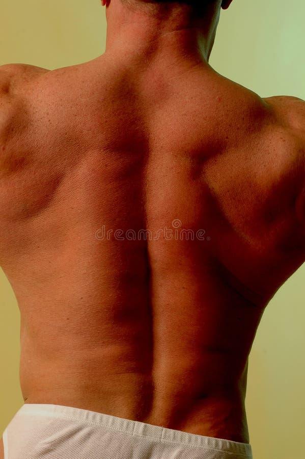Mannelijke rug royalty-vrije stock foto's