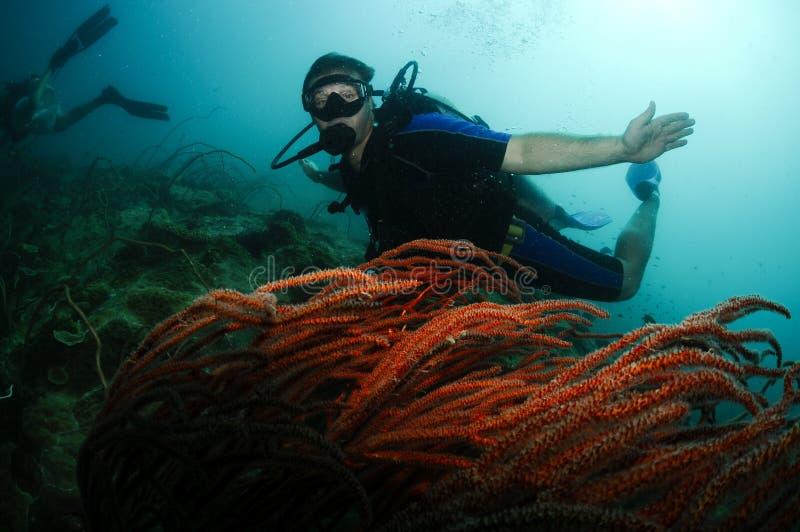 Mannelijke scuba-duiker die over rood koraal zwemt stock foto's