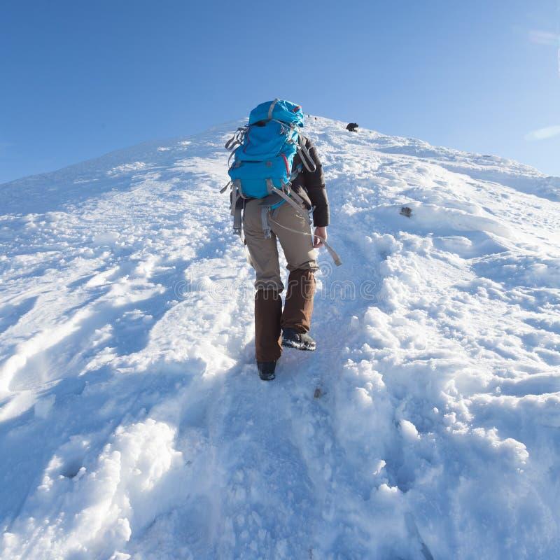 Mannelijke toerist met blauwe rugzakstijgingen van de sneeuwbergen De Oekraïense Karpaten in de winter royalty-vrije stock afbeeldingen