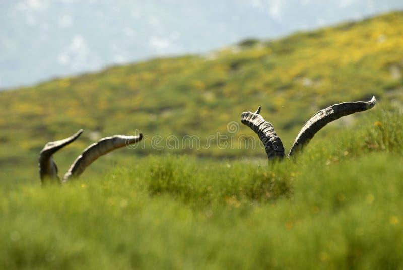 Mannelijke wildernis in de bergen stock afbeeldingen