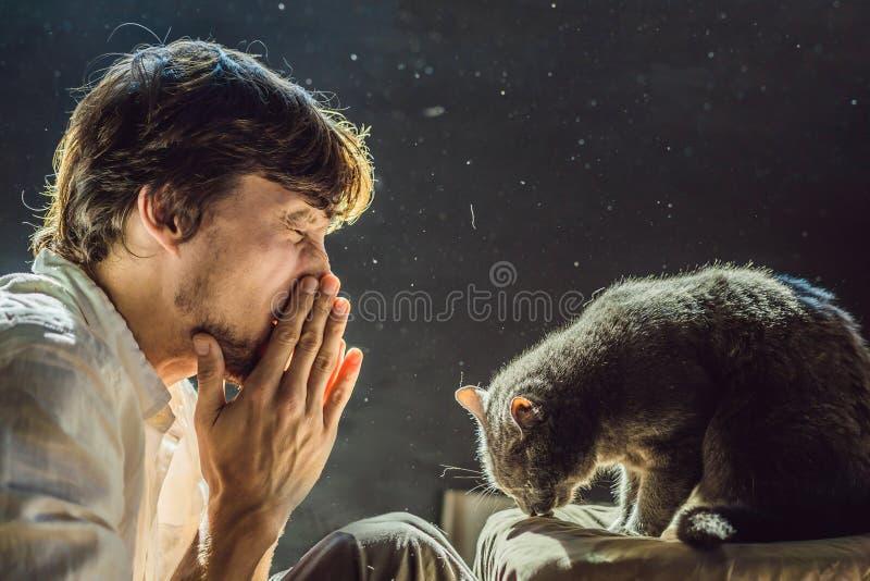 Mannen är allergisk till en katt En man nyser tack vare faktumet som bredvid ett husdjur arkivfoto