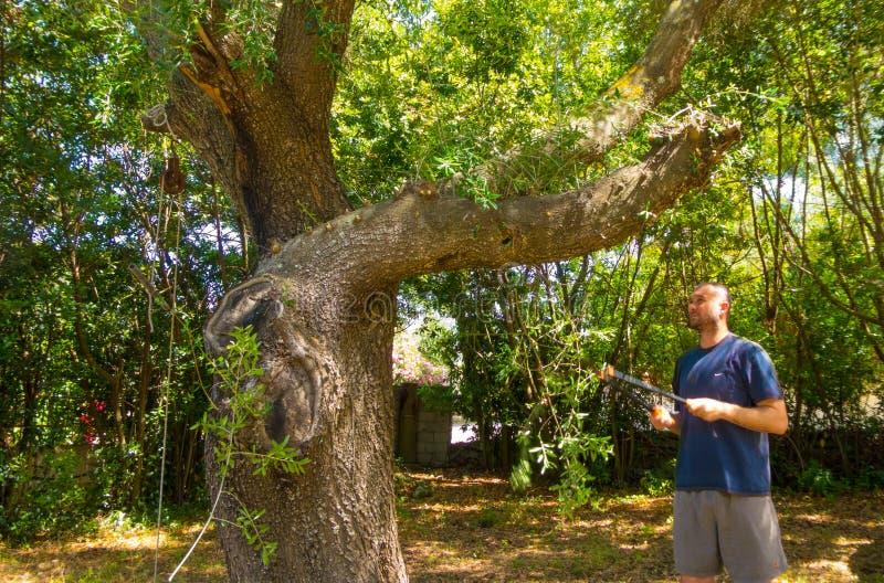 mannen använder saxen i en trädgård royaltyfri bild