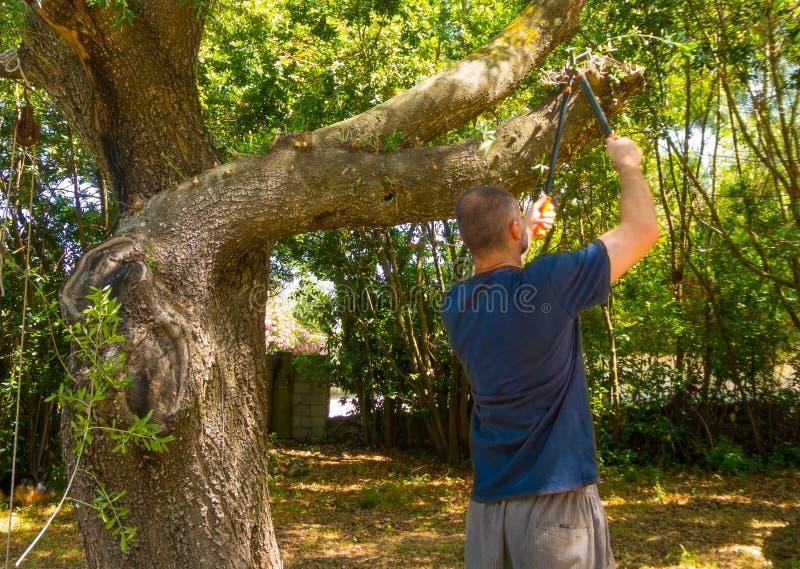 mannen använder saxen i en trädgård royaltyfri foto