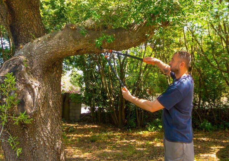 mannen använder saxen i en trädgård royaltyfria foton