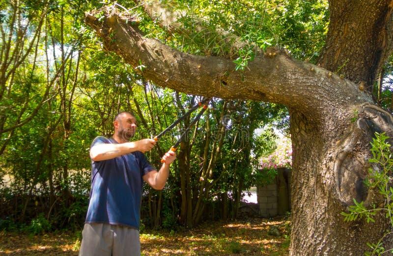 mannen använder saxen i en trädgård arkivfoto