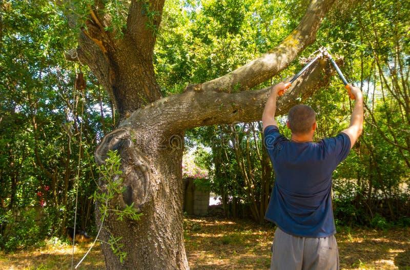 mannen använder saxen i en trädgård fotografering för bildbyråer