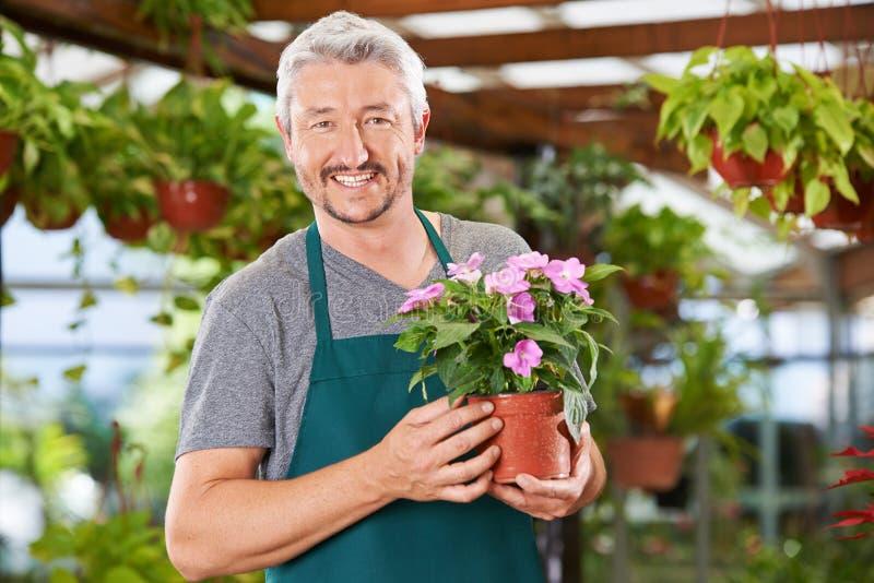 Mannen arbetar som en blomsterhandlare i trädgårdmitten arkivfoto