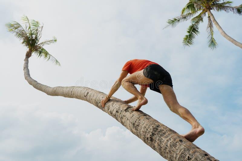 Mannen bestiger på en palmträd, en sportkropp arkivfoto