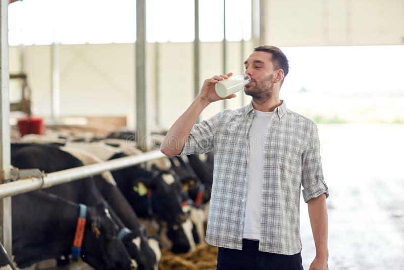 Mannen eller bonden som dricker kor, mjölkar på mejerilantgård royaltyfri foto
