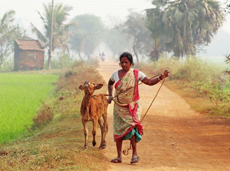mannen för bondefältlivstid krattar sugrörbyn royaltyfri fotografi