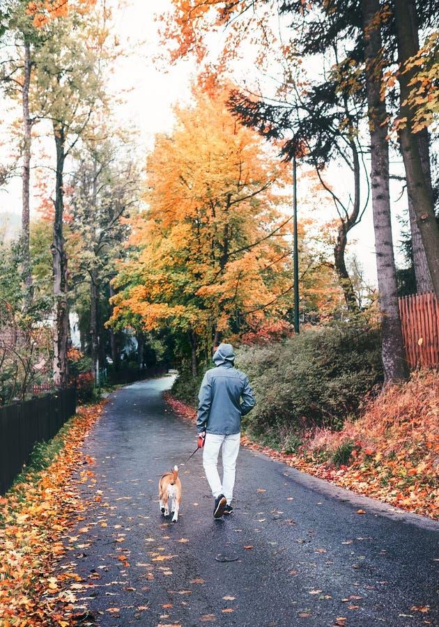 Mannen går med beaglehunden i regnig höstdag arkivfoto