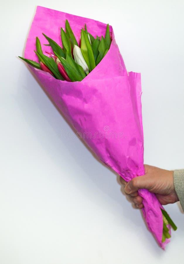 Mannen ger buketten av nya tulpanknappar som täckas med den manliga handen för rosa paperÑŽ med blommor som isoleras på vit bakgr fotografering för bildbyråer