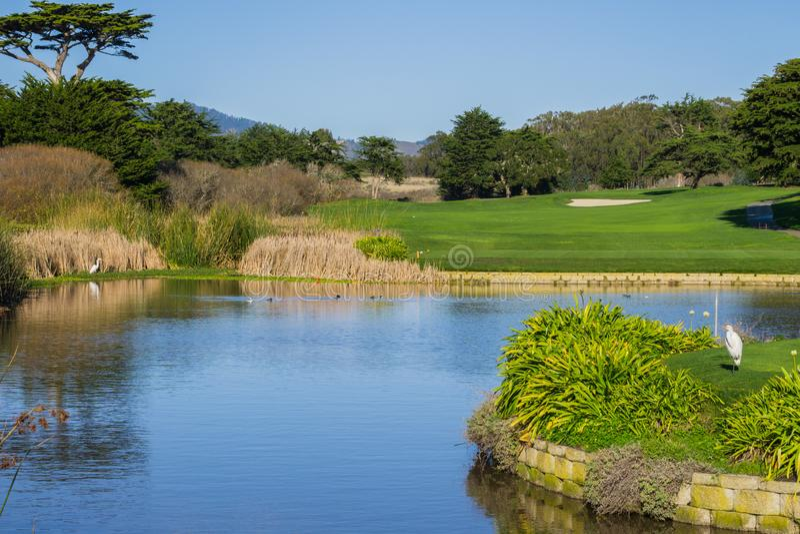 Mannen gjorde dammet nära en golfbana, Kalifornien royaltyfria bilder