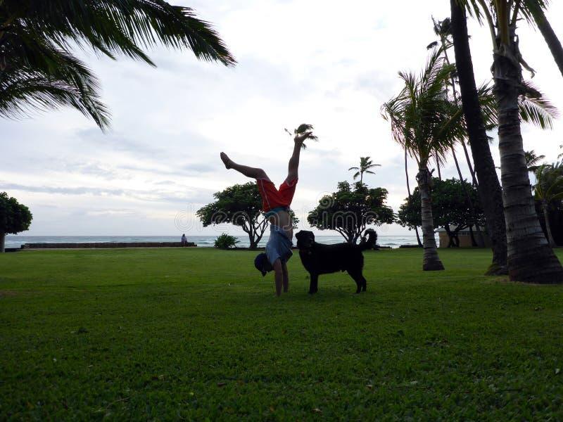 Mannen Handstanding på stranden parkerar på skymning bredvid svart hund fotografering för bildbyråer