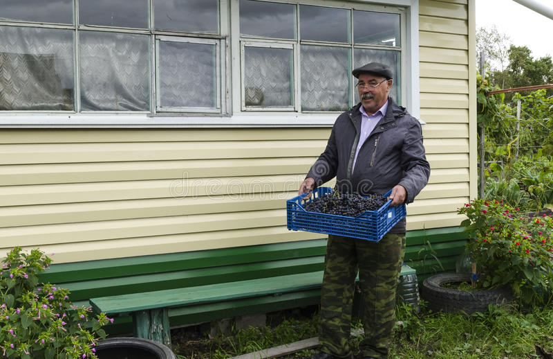 Mannen i landet med en korg av druvor arkivfoton