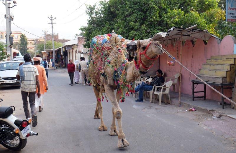 Mannen leder kamlet runt om centrum i Pushkar, Indien arkivbilder