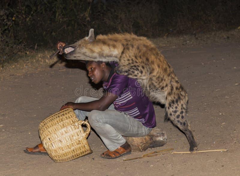 Mannen matar en prickig hyena i forntida stad av Jugol Harar Etiopien arkivbild