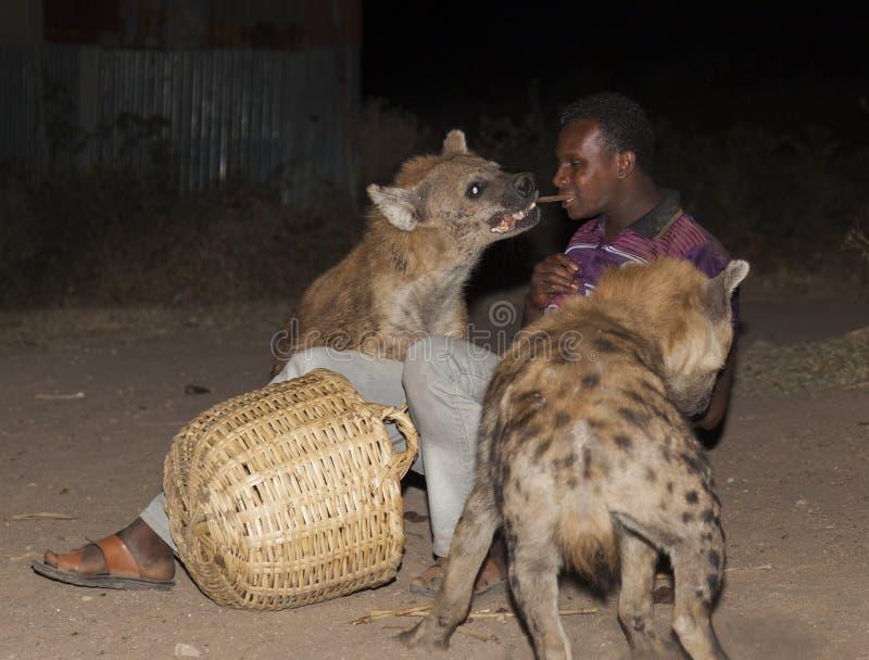 Mannen matar en prickig hyena i forntida stad av Jugol Harar Etiopien royaltyfri foto