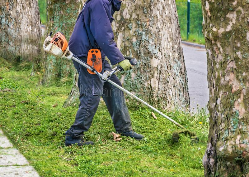Mannen med den slitna buskeskäraren klipper bevuxna gräsmattarundaträd bredvid vägen royaltyfri foto