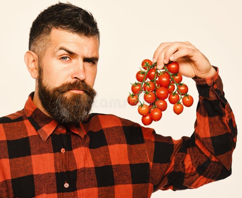 Mannen med skägget rymmer tomatbär isolerade på vit bakgrund royaltyfri foto