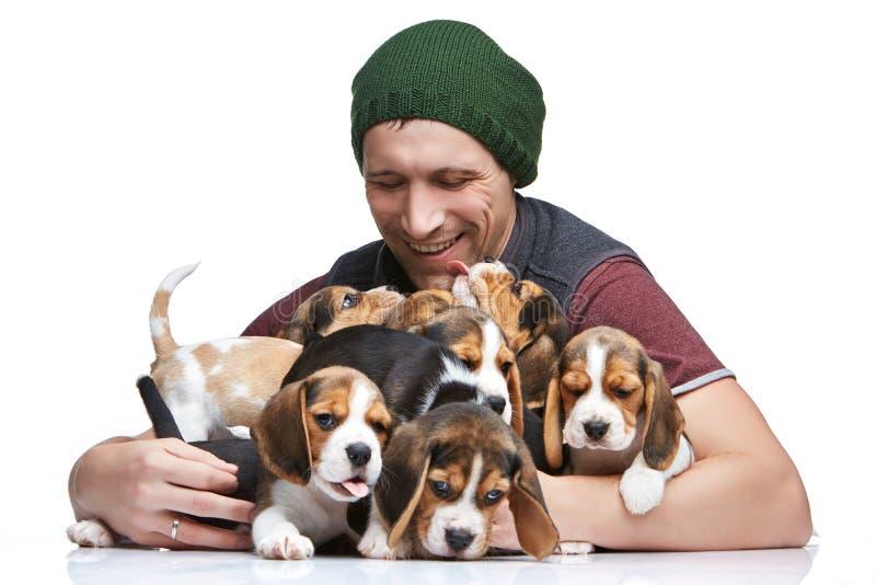 Mannen och den stora gruppen av valpar för en beagle royaltyfria bilder