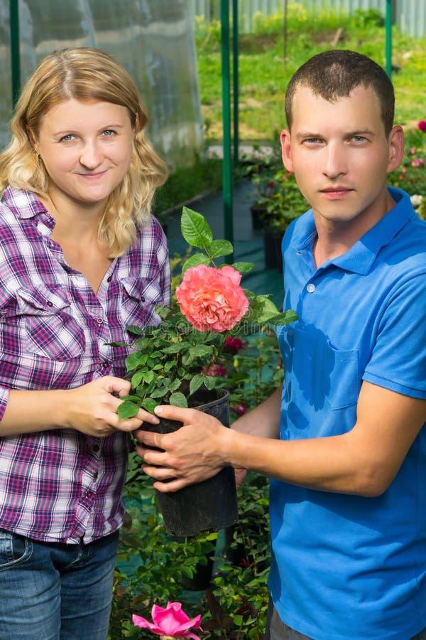 Mannen och kvinnan säljer en röd ros, i ett växthus royaltyfria foton