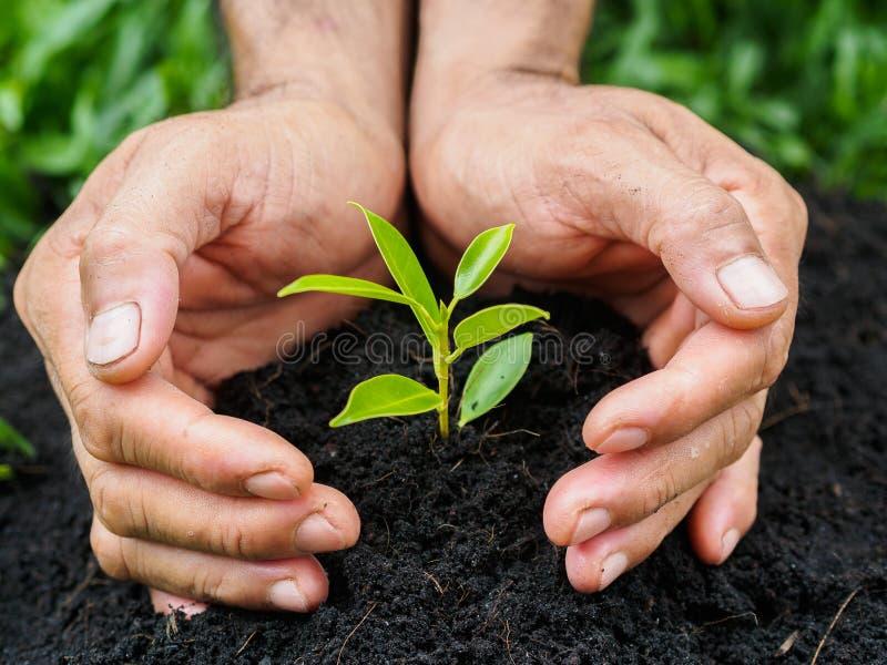 Mannen räcker att plantera trädet in i jorden plantera för begrepp arkivbild