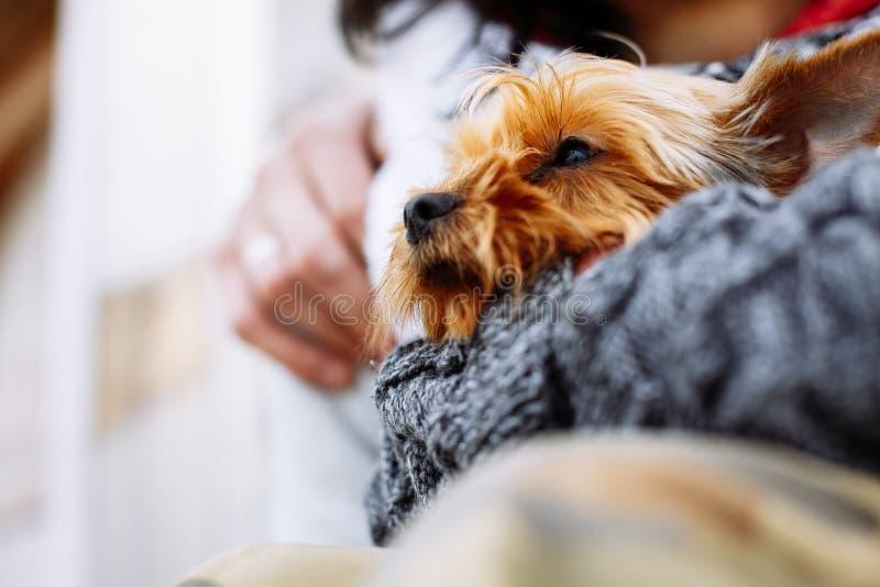 Mannen räcker den hållande hunden arkivbilder