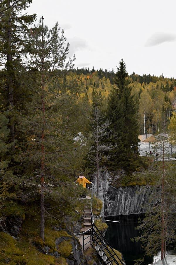 Mannen ser skogen arkivbilder