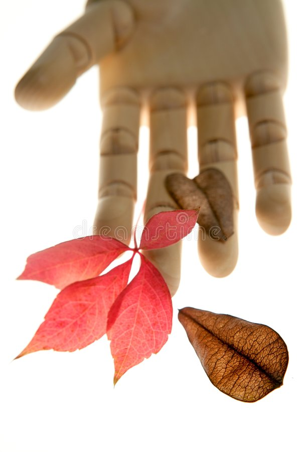 Download Mannequin Wooden Hand Holding Autumn Leaves Stock Photo - Image: 7549336