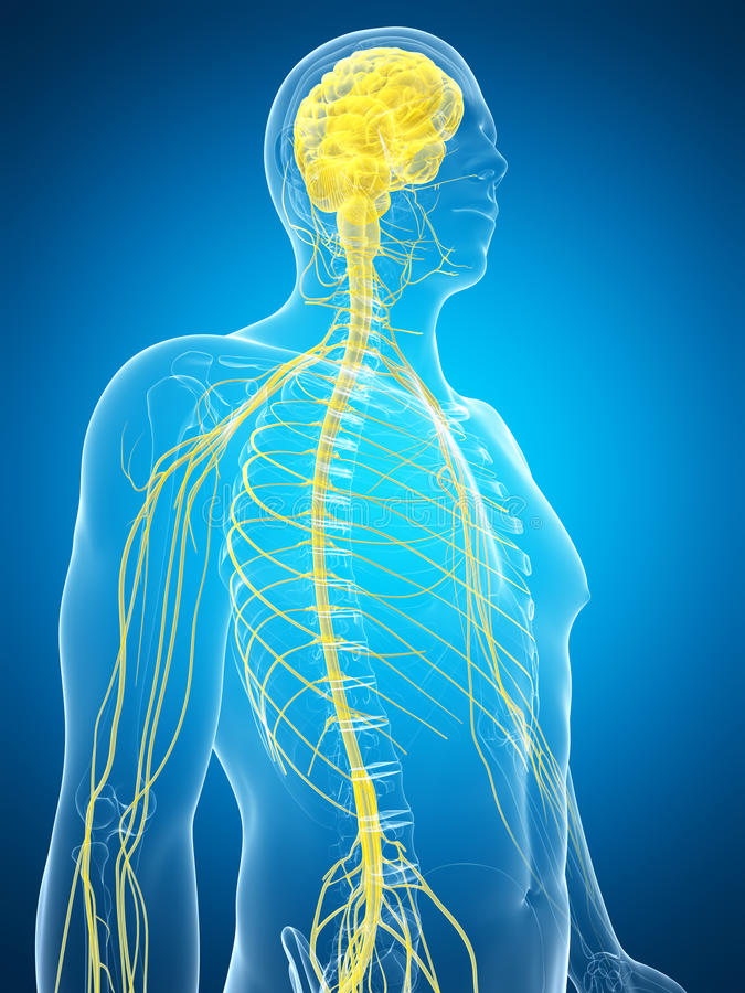 Mannetje benadrukt zenuwsysteem vector illustratie