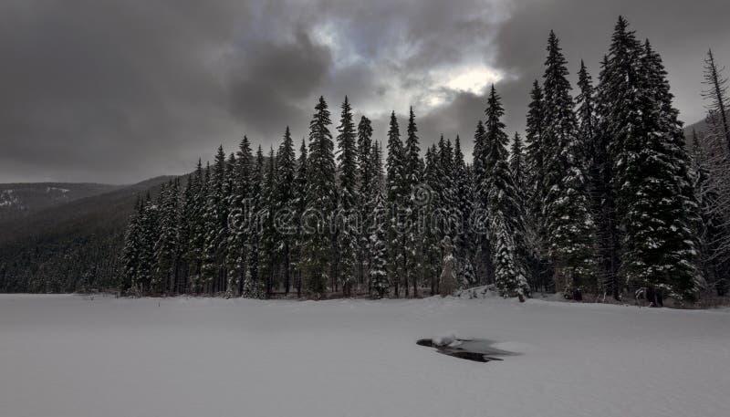 Manning Snow immagini stock libere da diritti