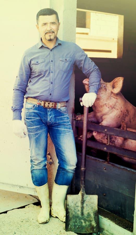Mannlandwirt, der im Schweinestall steht lizenzfreies stockbild