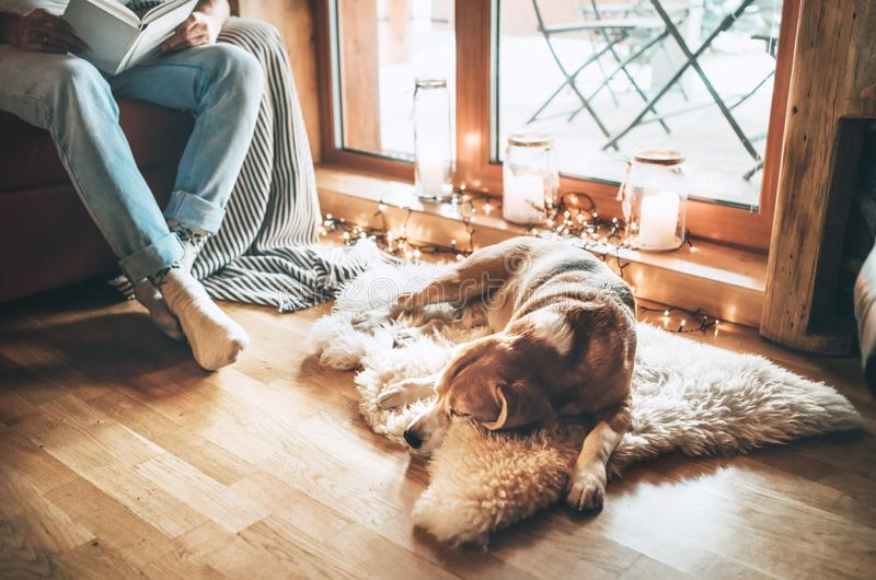 Mannlesebuch auf der gemütlichen Couch nahe dem Gleiten seines Spürhundhundes auf Schaffell in der gemütlichen Hauptatmosphäre Ru stockfotos