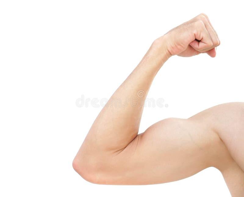 Mannmuskel des starken Armes lokalisiert auf weißem Hintergrund mit Ausschnitt stockfotografie