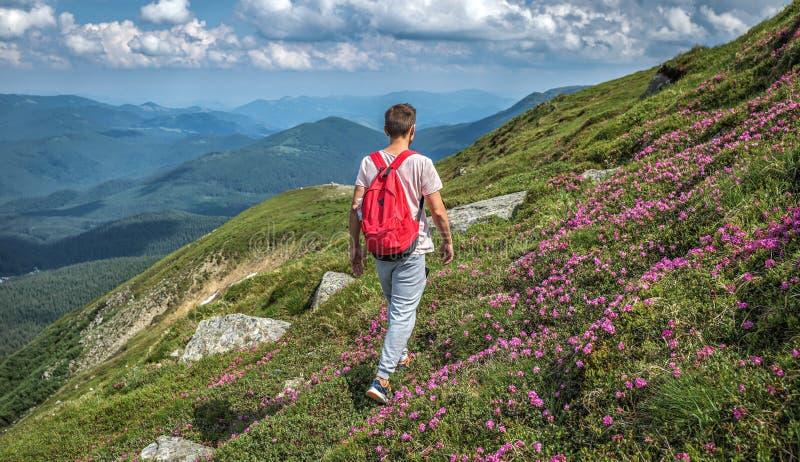 Mannreisender mit rotem Rucksack geht Berge, die äußere Sommerblumenrue lizenzfreies stockfoto
