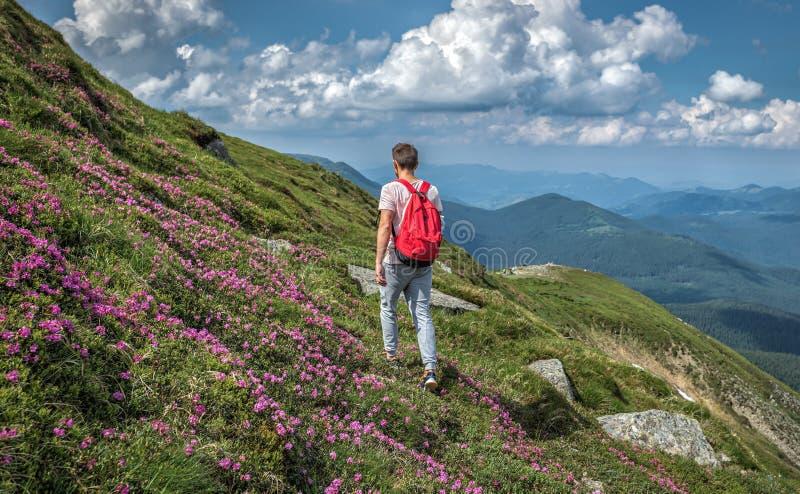 Mannreisendwanderung im Freien mit Rucksackwegen außerhalb des Aufstiegs in den Bergen, Sommerrueblumen lizenzfreies stockfoto