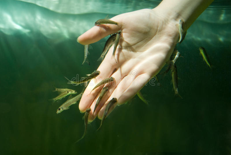 Mano in acqua con i pesci. Procedura della stazione termale fotografia stock libera da diritti