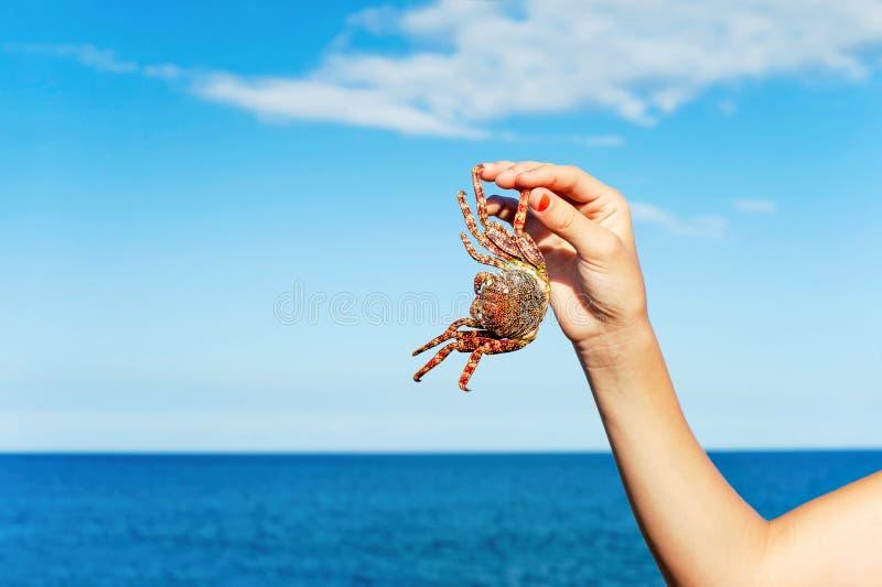 Mano adolescente che tiene un granchio su un fondo blu dell'oceano fotografia stock libera da diritti
