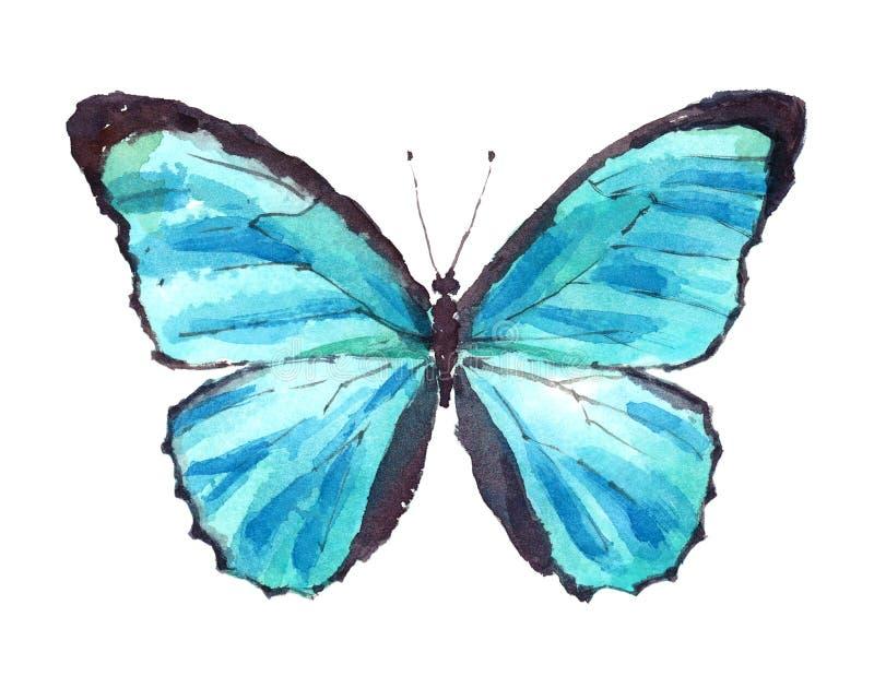 Mano azul de la acuarela de la mariposa de Morpho dibujada ilustración del vector