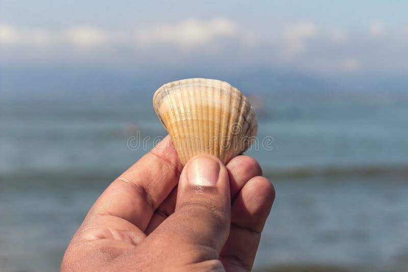 Mano che tiene grande conchiglia che affronta l'oceano fotografie stock libere da diritti