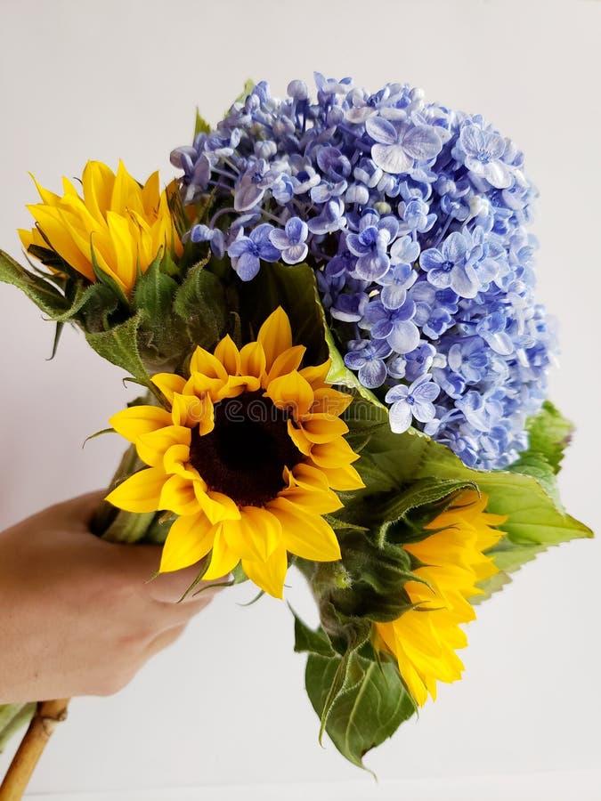 mano che tiene un mazzo floreale con i fiori ed i girasoli dell'ortensia per il regalo di amore fotografia stock libera da diritti