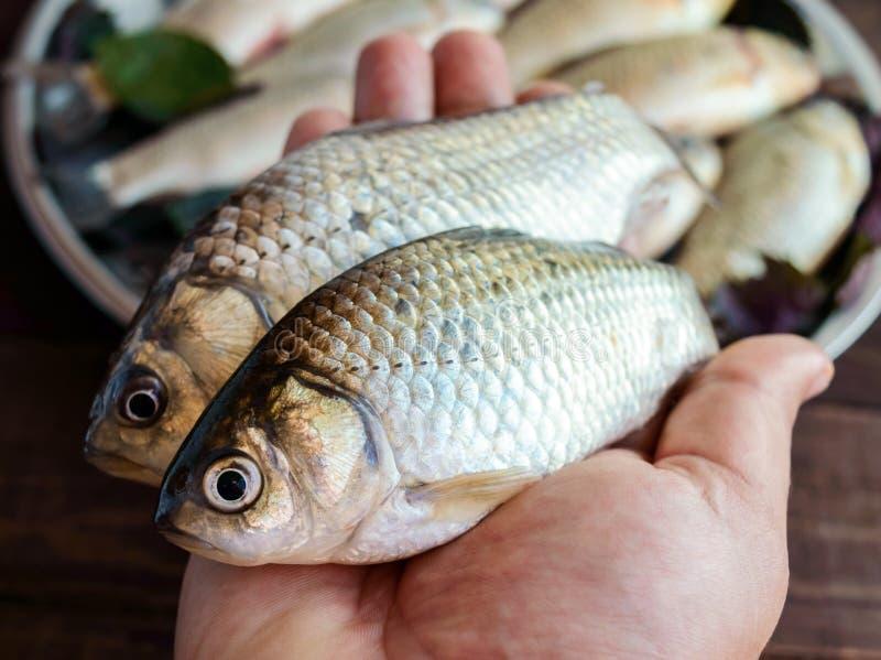 Mano che tiene un pesce vivo & un x28; carp& x29; Cattura fresca La vista superiore fotografie stock