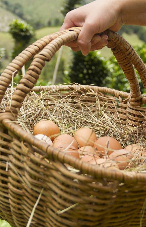 Mano con el bascket del backsground verde de los huevos frescos foto de archivo libre de regalías