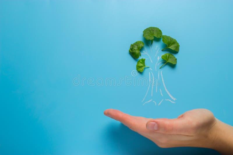 Mano con el calentamiento del planeta de la disminución del árbol imagen de archivo